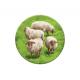 Каркассон. Холмы и овцы  (доп.)